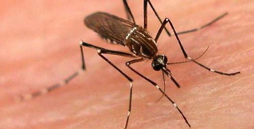 Dengue hemorrágico causa muerte enCozumel