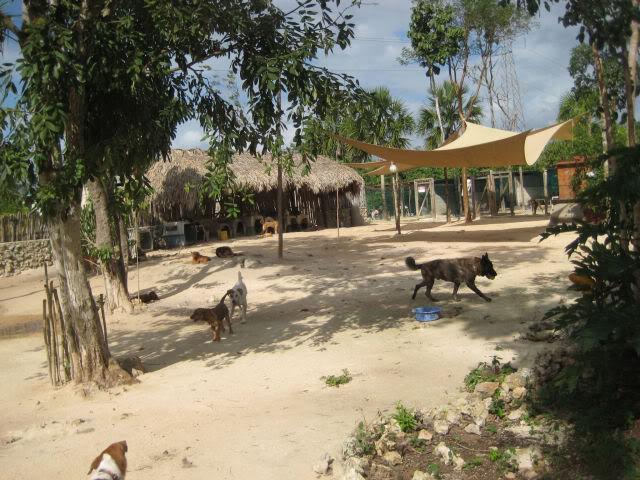 Alumno de UT pisa un gato en Tierra de Animales y casi lo mata eldueño