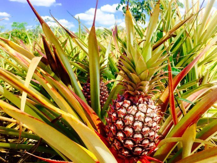 Dulce inicio de 2018 para agro en Bacalar; aterriza inversión de $19millones