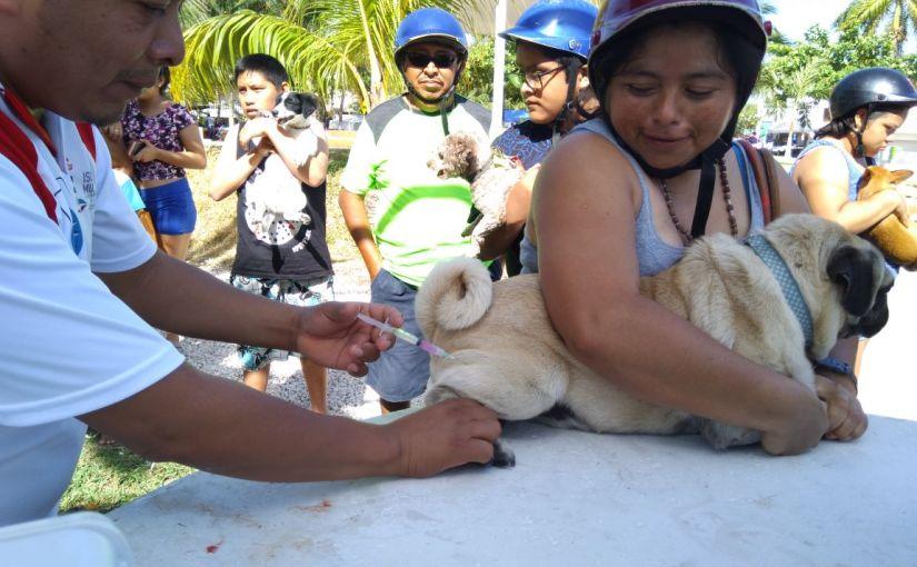 Ayuntamiento de Isla Mujeres invita a comunidad isleña a participar en Semana Nacional de VacunaciónAntirrábica