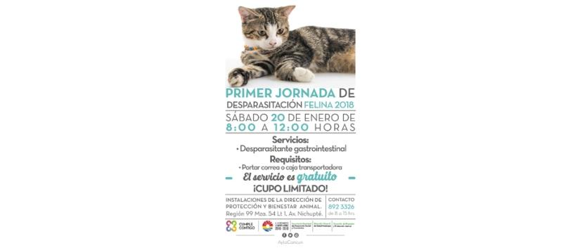 INVITA AYUNTAMIENTO A JORNADA DE DESPARASITACIÓNFELINA