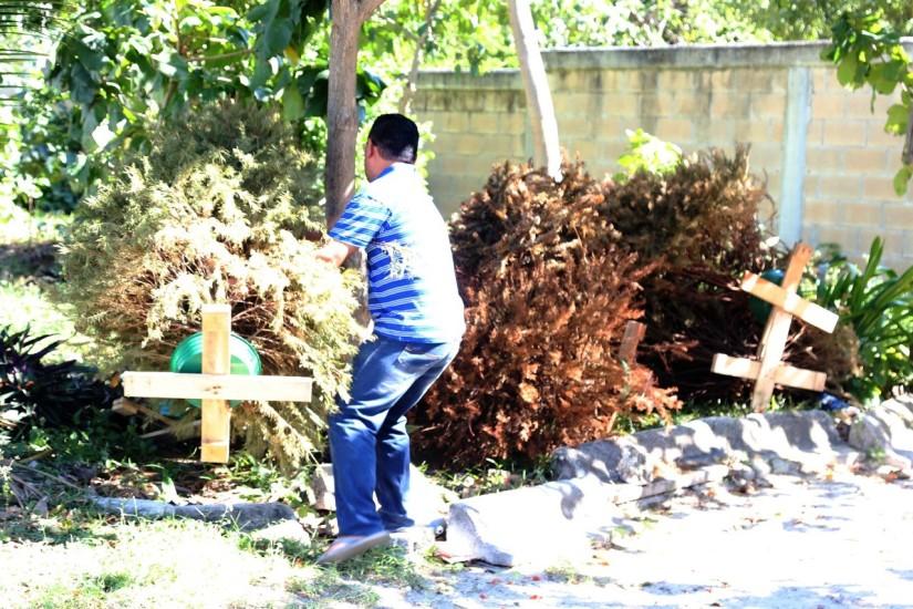 Gran participación de isleños en acopio de árbolesnavideños
